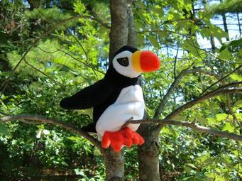 Another puffin, sittin' in a tree